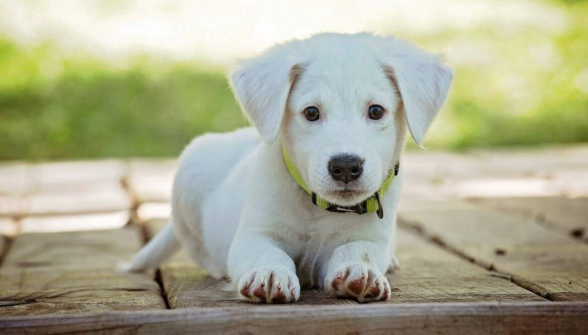 The Top Basic Needs of Your Pet Dog
