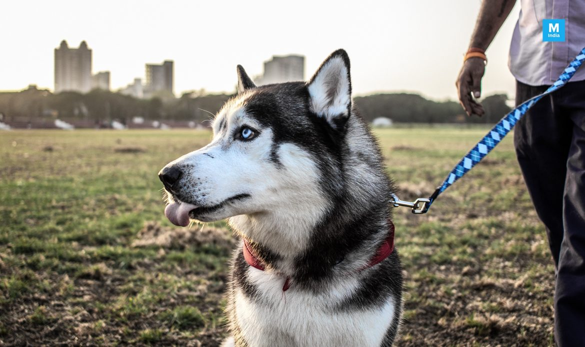 Some Interesting Science-Backed Facts of Having a Pet Dog